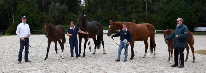 Foals chevaux mâle et femelle